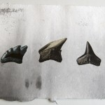 MidAtlantic Fossils: Three Teeth